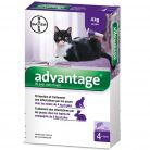 Advantage chat lapin + de 4kg x4...