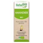 Herbalgem Amandier bio 30ml
