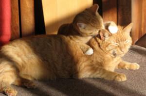 hygiène du chien et du chat