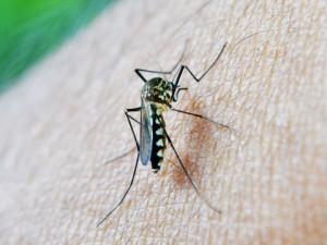 Prévenir et soulager les piqûres d'insectes_03