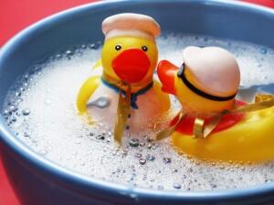 water-bird-white-sweet-plastic-cute-577337-pxhere.com