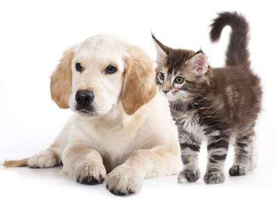 Allergie aux animaux domestiques