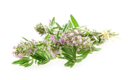 La phytothérapie repose sur l'usage des plantes médicinales